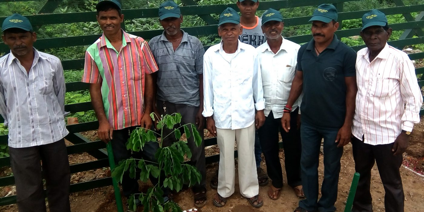 Biodiversity Tree Plantation